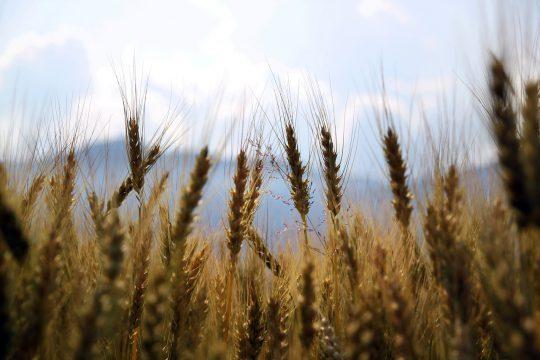 Herbicydy – doskonałe środki ochrony roślin